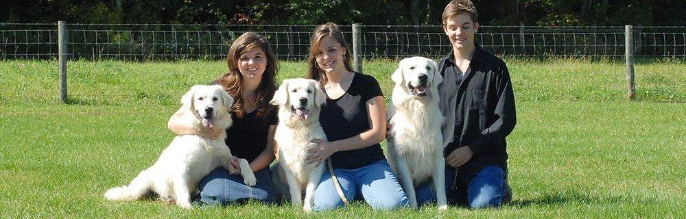 family with Treasure Golden English cream golden retriever dogs