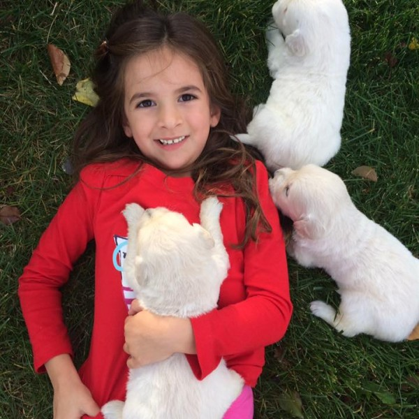 Click to enlarge: little girl with white puppies